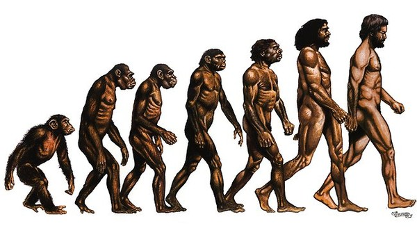 evolitio.jpg