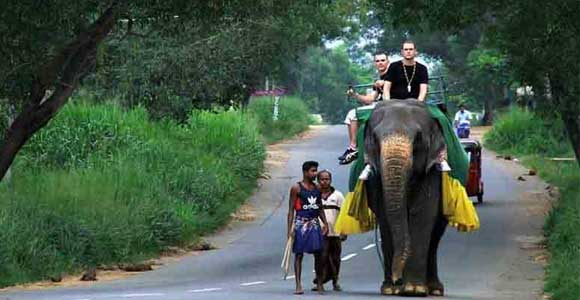 Sri-Lanka-adventure-holidays-travel-tours-elephant